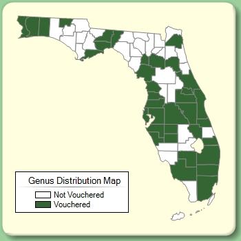 Hydrilla - Genus Page - ISB: Atlas of Florida Plants