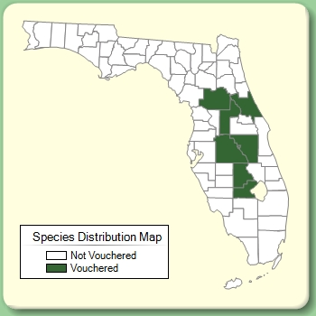 Calamintha ashei Species Page ISB Atlas of Florida Plants